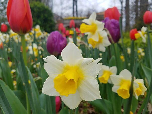 Dixon Gallery Blooms 2